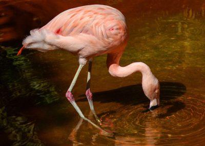 flamingo-1040451