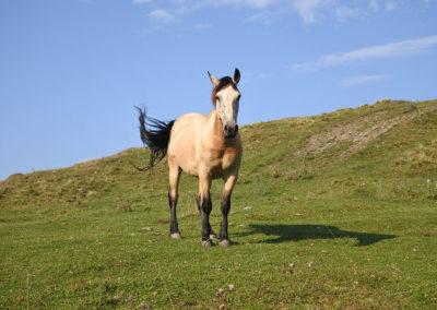 Wild-Horse